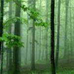 agarwood investment